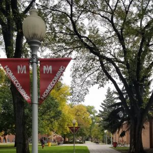 A picture of the homecoming banners on the light posts in the MSUM campus mall